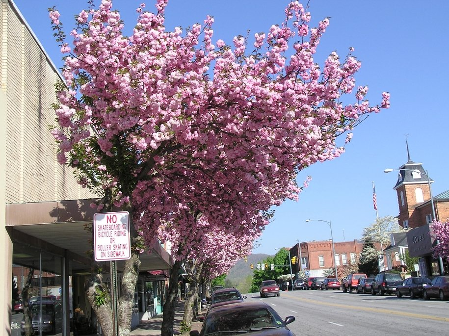 Small towns in nc in search of mayberry page 2 - Romanian cherry tree varieties ...